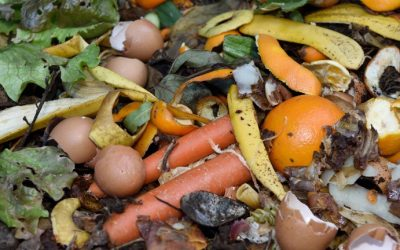 Cutting Down on Food Waste : Food Waste Reduction Campaign Commences April 22