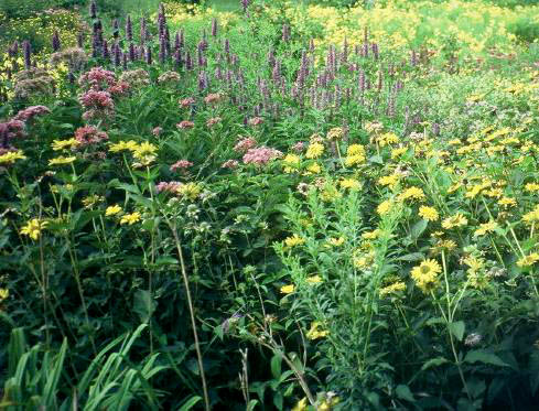 Native Plants for a Sustainable Garden